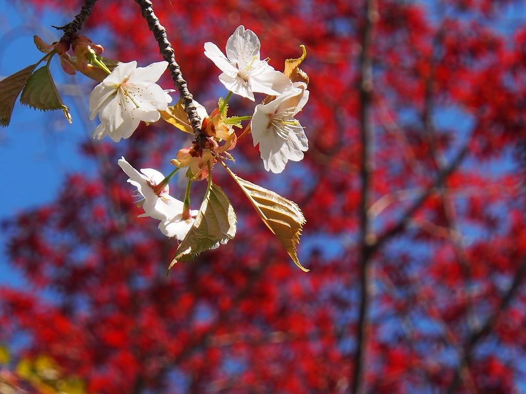 桜_f0138096_18143818.jpg