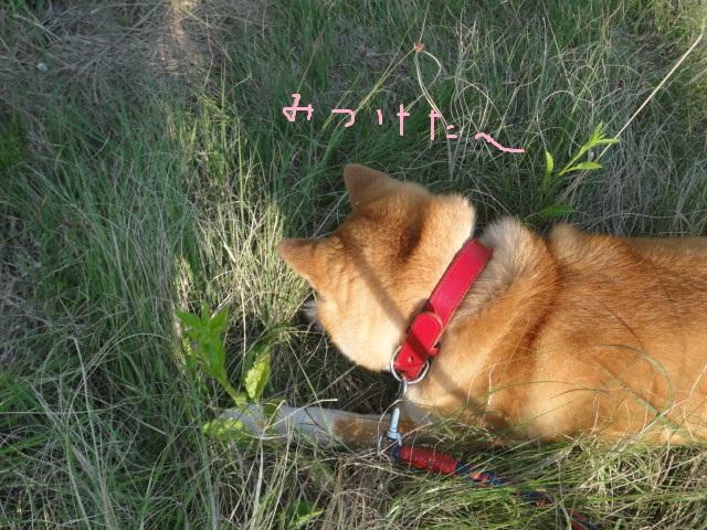 草と戯れて_e0201009_23134262.jpg