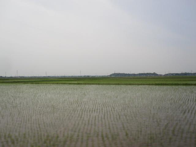 緑の水田_c0200314_21361885.jpg