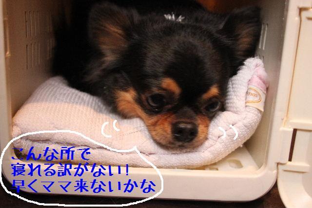 b0130018_12163855.jpg