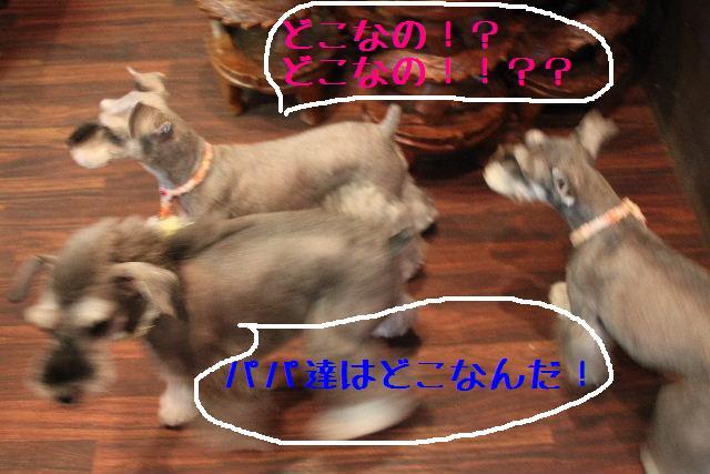 b0130018_9473611.jpg