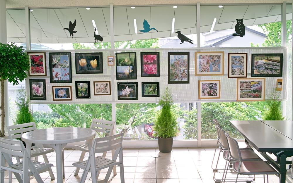 ゆいの花公園での写真展示、はじめました。_c0223825_2335285.jpg