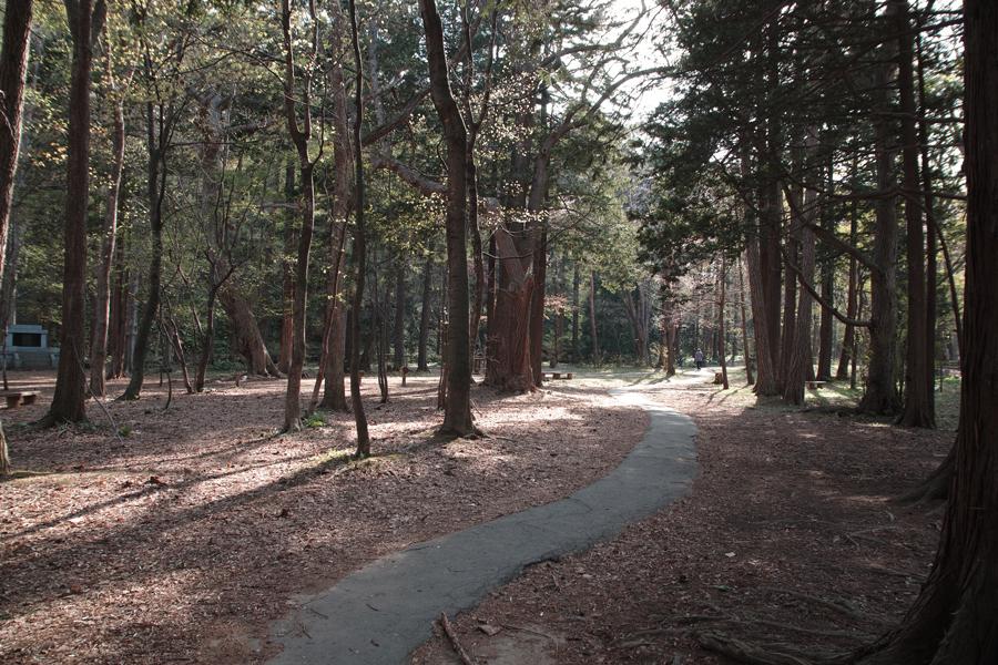 円山原始林 ~私の散歩コース~ 本日2本目の記事_c0223825_5293095.jpg