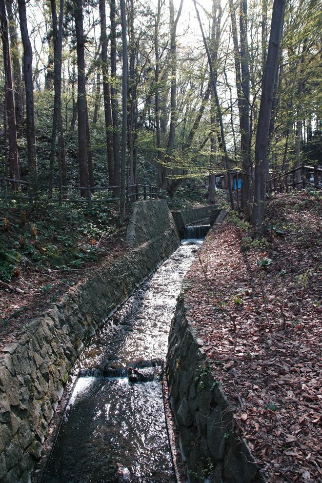円山原始林 ~私の散歩コース~ 本日2本目の記事_c0223825_5305722.jpg