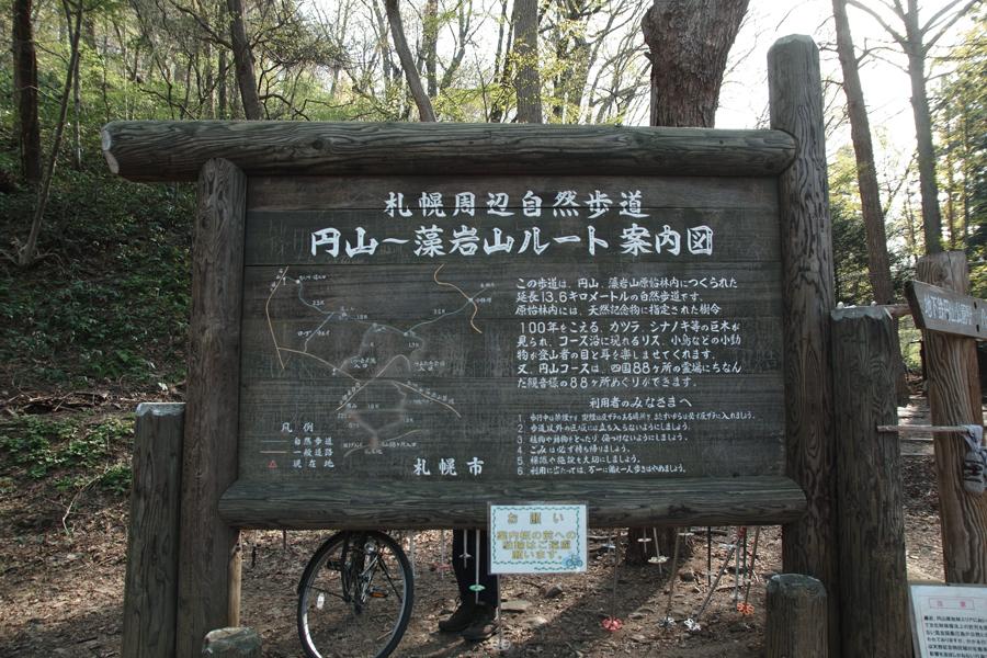 円山原始林 ~私の散歩コース~ 本日2本目の記事_c0223825_5342090.jpg