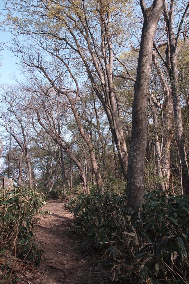 円山原始林 ~私の散歩コース~ 本日2本目の記事_c0223825_5395926.jpg