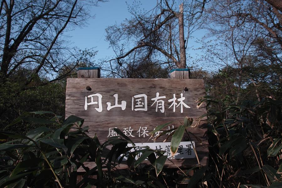 円山原始林 ~私の散歩コース~ 本日2本目の記事_c0223825_5412859.jpg