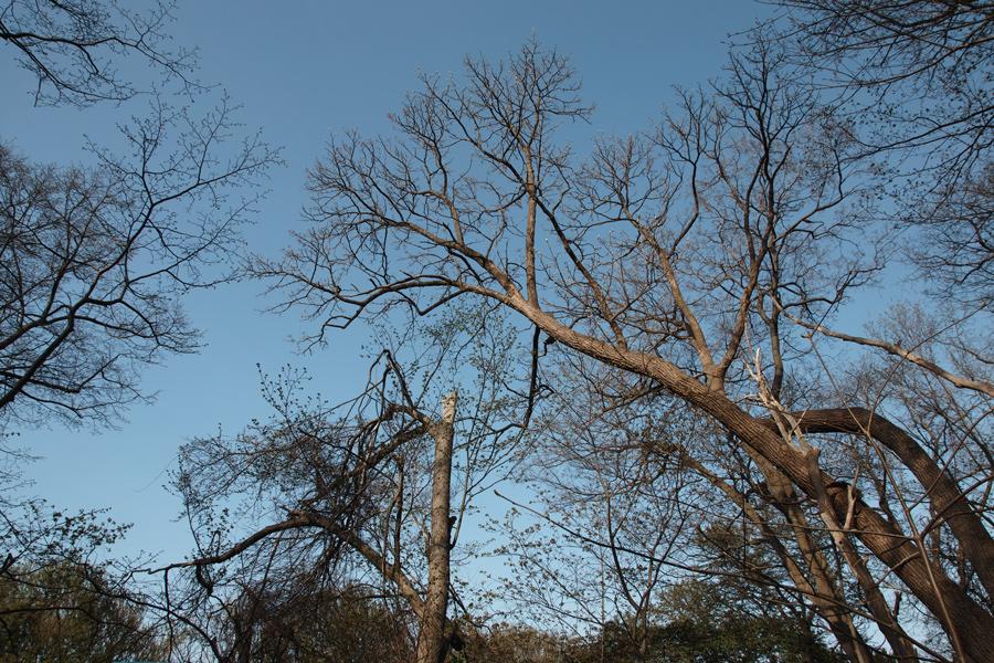円山原始林 ~私の散歩コース~ 本日2本目の記事_c0223825_544649.jpg
