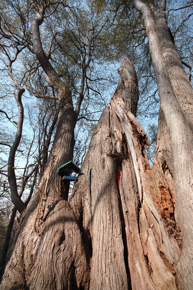 円山原始林 ~私の散歩コース~ 本日2本目の記事_c0223825_550595.jpg