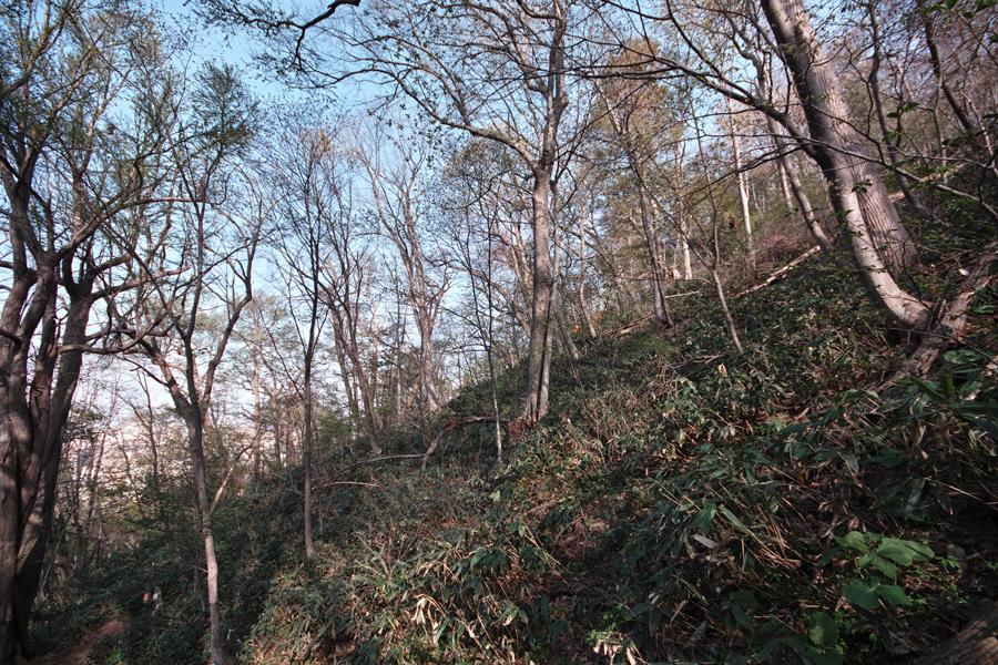 円山原始林 ~私の散歩コース~ 本日2本目の記事_c0223825_5574481.jpg