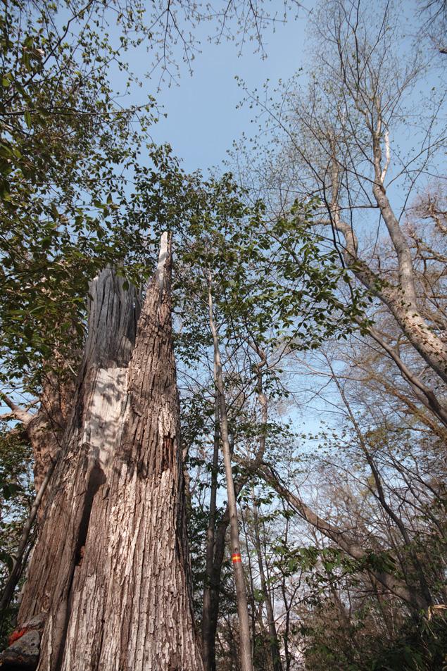 円山原始林 ~私の散歩コース~ 本日2本目の記事_c0223825_6184198.jpg