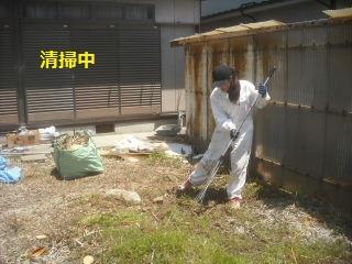 フエンス設置・他シュロの木伐採_f0031037_16422427.jpg