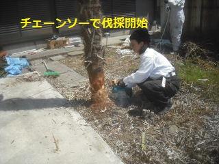 フエンス設置・他シュロの木伐採_f0031037_16424244.jpg