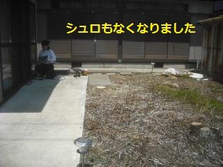 フエンス設置・他シュロの木伐採_f0031037_1642745.jpg