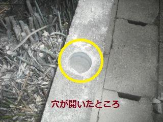 フエンス設置・他シュロの木伐採_f0031037_16445992.jpg