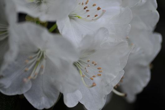 我が家の花達(1)_c0093046_16305945.jpg