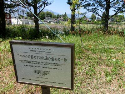 つなぐNPOの浅川兄弟ゆかりの道_f0019247_14475021.jpg