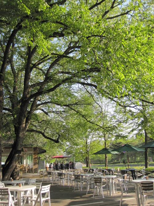 ヤマナシの木陰で_f0236260_22165176.jpg