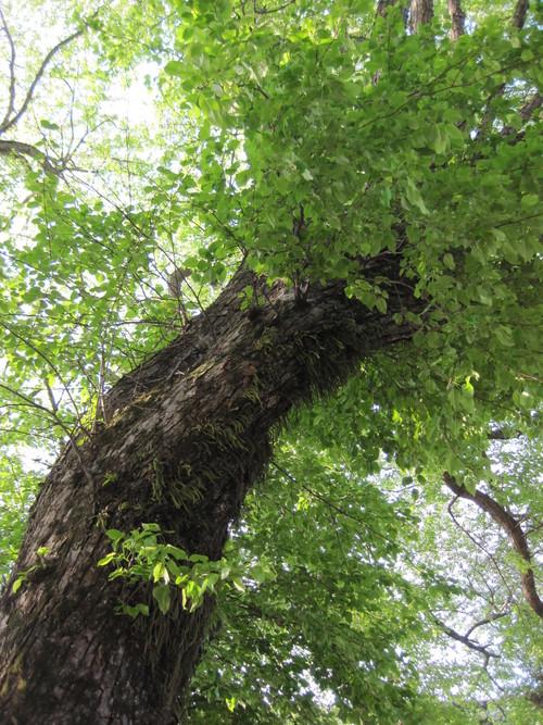 ヤマナシの木陰で_f0236260_2220026.jpg