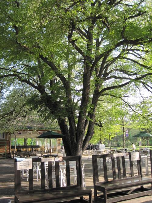 ヤマナシの木陰で_f0236260_2224736.jpg
