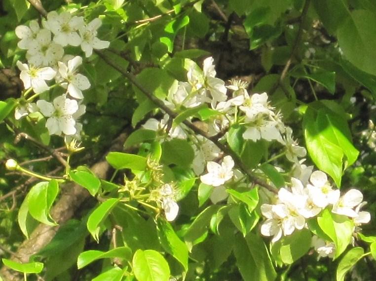 ヤマナシの木陰で_f0236260_22374053.jpg