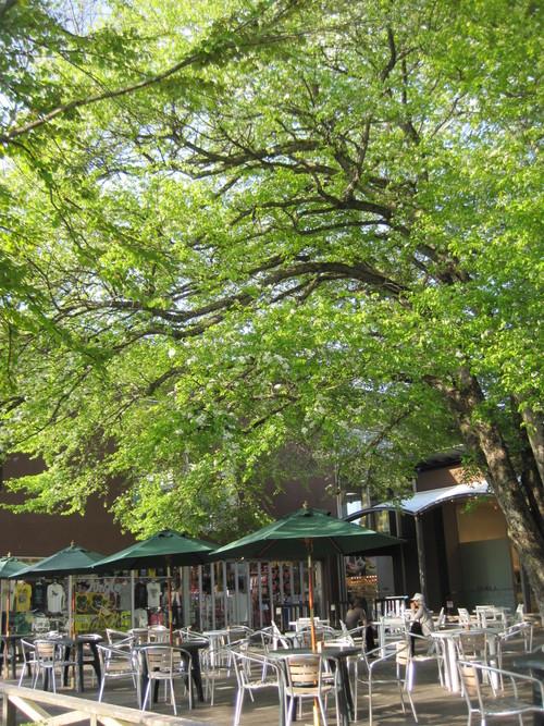 ヤマナシの木陰で_f0236260_22444629.jpg