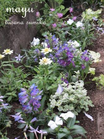 初夏の花壇♪_a0243064_1561363.jpg