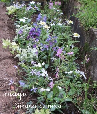 初夏の花壇♪_a0243064_1563126.jpg