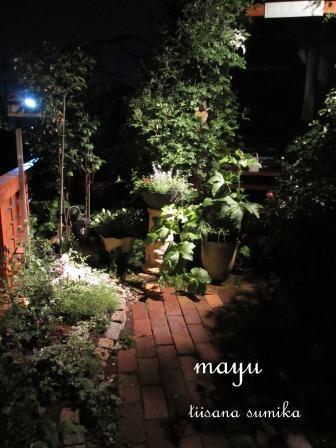 初夏の花壇♪_a0243064_2163858.jpg