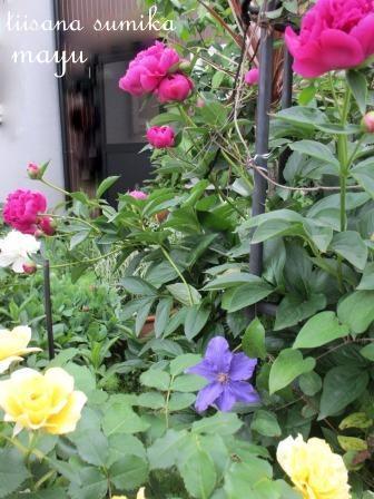 初夏の花壇♪_a0243064_2193677.jpg