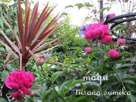 初夏の花壇♪_a0243064_2195971.jpg