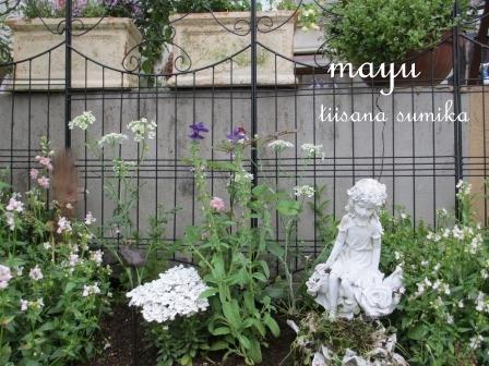 初夏の花壇♪_a0243064_274779.jpg