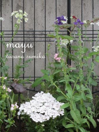 初夏の花壇♪_a0243064_284850.jpg