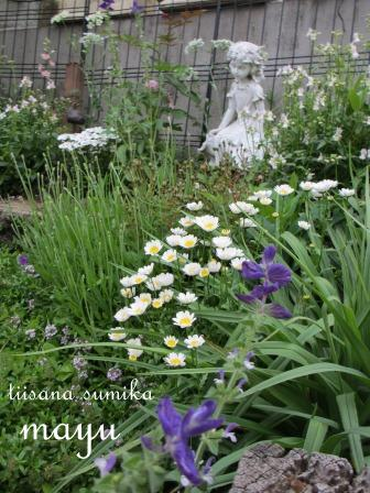 初夏の花壇♪_a0243064_294566.jpg