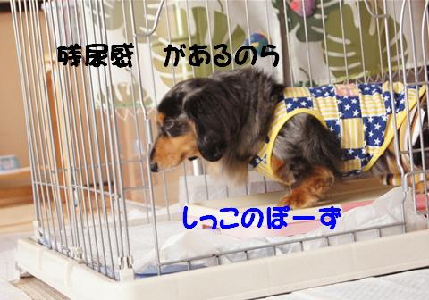 f0195891_20431666.jpg