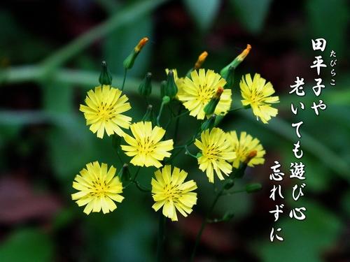 f0137096_22491142.jpg