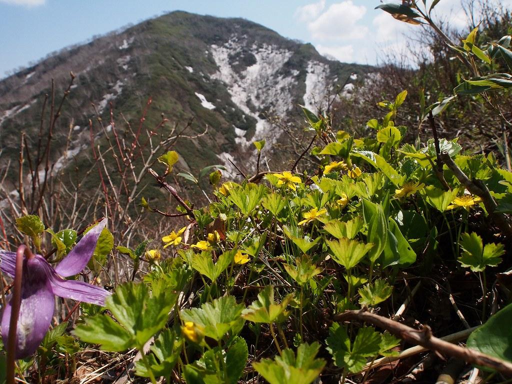 5月18日、神居尻山-その2-_f0138096_0115451.jpg