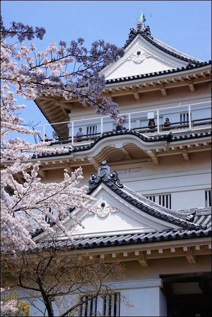 小田原城址公園の桜_b0145398_11142790.jpg