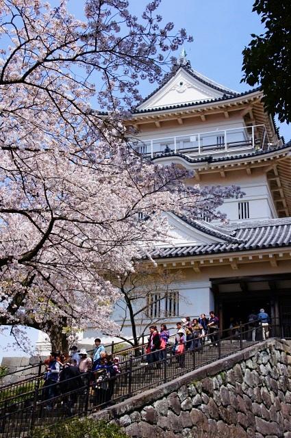 小田原城址公園の桜_b0145398_11215456.jpg