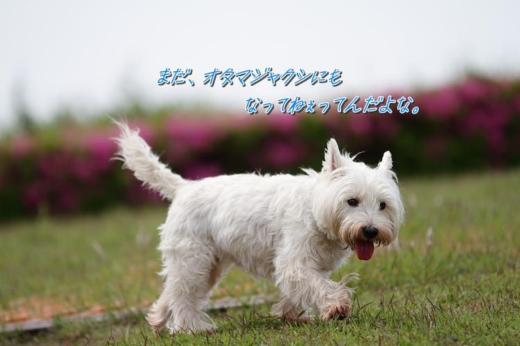 b0249720_216168.jpg