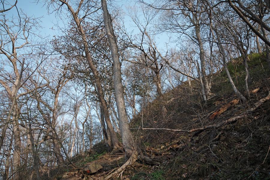 円山登山 ~札幌市内を一望できる気軽なトレッキング~_c0223825_105551.jpg