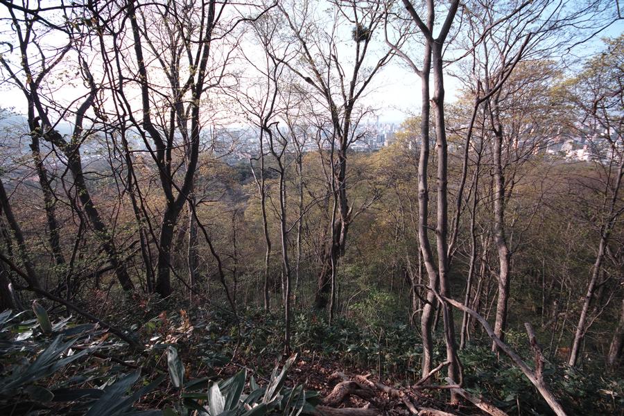 円山登山 ~札幌市内を一望できる気軽なトレッキング~_c0223825_1462749.jpg