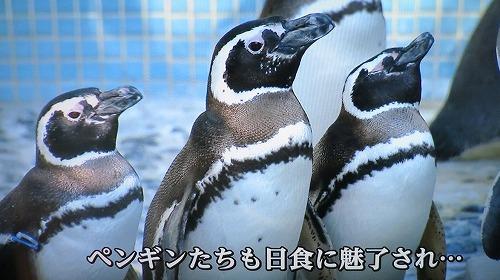 岡山では部分日食_a0055835_16271019.jpg