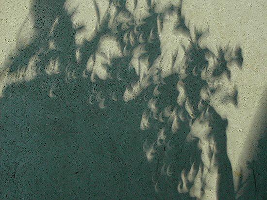 日食の影は波小紋_b0073937_859513.jpg