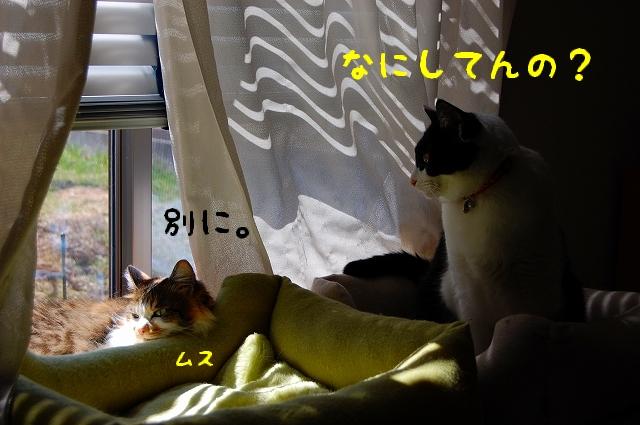 c0181639_01103.jpg