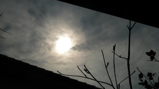 思いのほかの金環日食☆_c0152341_232810100.jpg