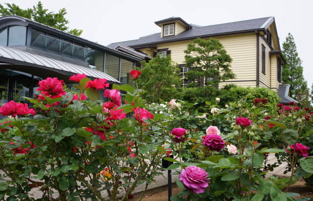 薔薇と洋館_a0257652_17465749.jpg