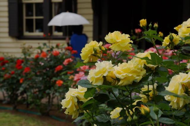 薔薇と洋館_a0257652_1747219.jpg