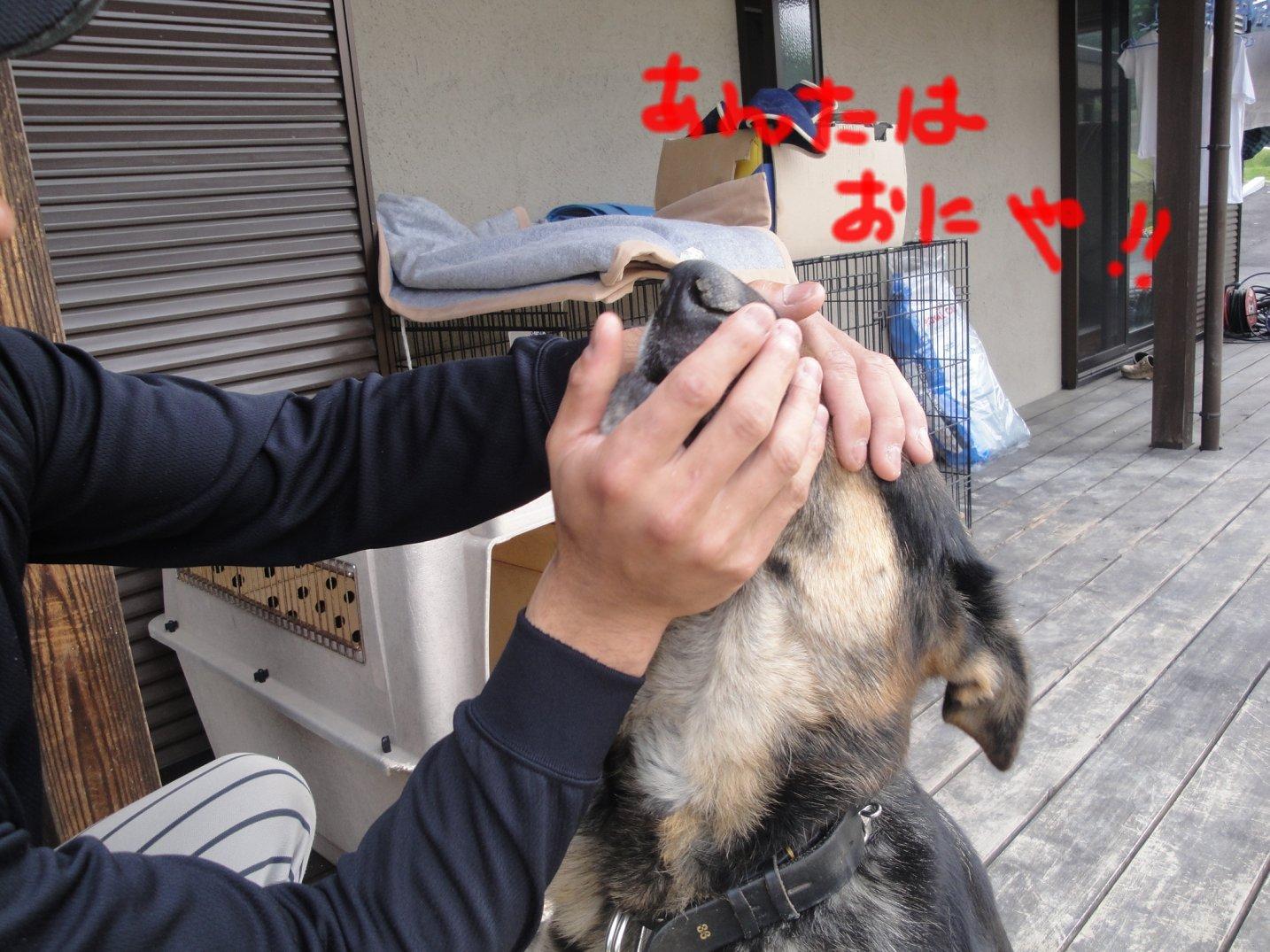 b0113663_911080.jpg