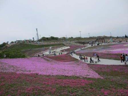 """茶臼山""""天空の花回廊""""芝桜を見て来ました♪_a0243064_15513539.jpg"""